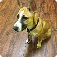 Adopt A Pet :: Gibbs - Hagerstown, MD