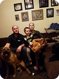 Shar Pei Mix Dog for adoption in Odessa, Texas - Hazel