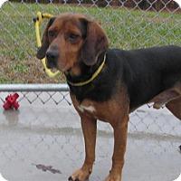Adopt A Pet :: Gatsby - Elmwood Park, NJ