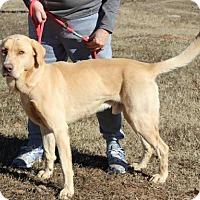 Adopt A Pet :: Newman - No Longer Accepting Applications - Potomac, MD