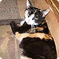 Adopt A Pet :: Reese - Colmar, PA