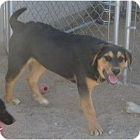 Adopt A Pet :: JoJo - Golden Valley, AZ