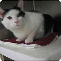 Adopt A Pet :: Prince Charming - Greenville, SC