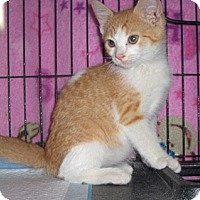 Adopt A Pet :: Conner - Richmond, VA