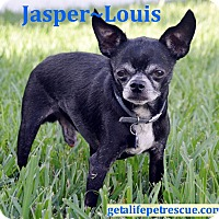 Adopt A Pet :: Jasper~Louis - Wellington, FL