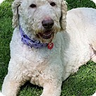 Adopt A Pet :: ABBY**5 YRS OLD