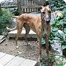 Adopt A Pet :: Kadison