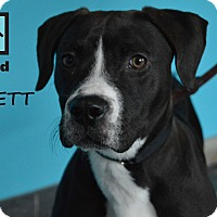 Adopt A Pet :: Emmett - Chicago, IL