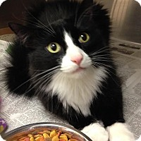 Adopt A Pet :: Misfit - East Brunswick, NJ