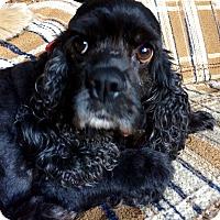 Adopt A Pet :: ISABELLE - Tacoma, WA