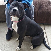 Adopt A Pet :: Pinky- In Foster to Adopt - Lisbon, OH