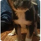 Adopt A Pet :: Dennis's Pup Sprinkles