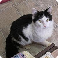 Adopt A Pet :: GILBERT - Aiken, SC
