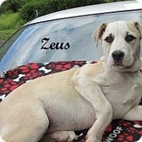 Adopt A Pet :: Dane - Bartonsville, PA