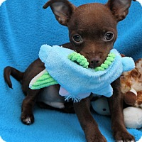 Adopt A Pet :: Bruiser - Irvine, CA