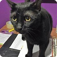 Adopt A Pet :: Sheldon - Herndon, VA