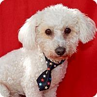 Adopt A Pet :: Coco Bean - Irvine, CA