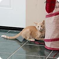 Adopt A Pet :: Isaac - Flora, IL