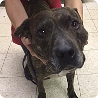 Adopt A Pet :: Neil- Ohio - Fulton, MO