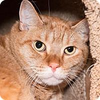 Adopt A Pet :: Ken - Seville, OH