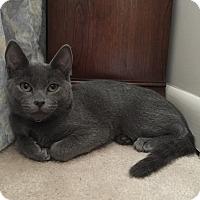 Adopt A Pet :: Gem - Cincinnati, OH