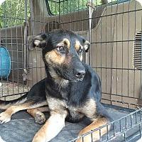 Adopt A Pet :: Watson - Jefferson, TX