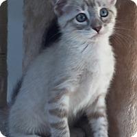 Adopt A Pet :: Aspen - Cerritos, CA