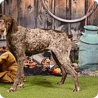 Adopt A Pet :: Pheobe - Duart, ON