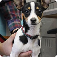 Adopt A Pet :: Lexi - Palo Alto, CA