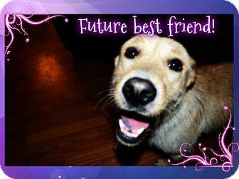 Labrador Retriever/Terrier (Unknown Type, Small) Mix Dog for adoption in Marietta, Georgia - Harriet