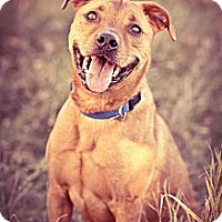 Adopt A Pet :: Will - Marion, WI