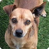 Adopt A Pet :: Zoom - Justin, TX