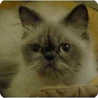 Adopt A Pet :: Fergie - Beverly Hills, CA