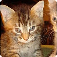 Adopt A Pet :: Gaston - Orlando, FL