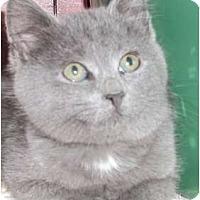 Adopt A Pet :: Brigadier - Acme, PA