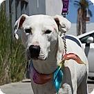 Adopt A Pet :: Blanco