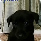Adopt A Pet :: Tyrion