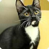 Adopt A Pet :: Chinny - Sacramento, CA