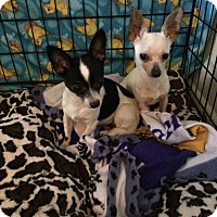 Adopt A Pet :: Trent and Gavin - Chicago, IL