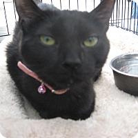 Adopt A Pet :: HERSHEY - New york, NY