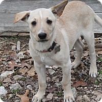 Adopt A Pet :: Ziggy - Oakland, AR