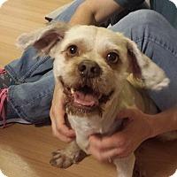 Adopt A Pet :: Chance - Windermere, FL