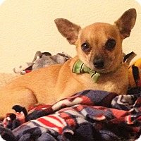 Adopt A Pet :: Ryder formerly Speedy - Las Vegas, NV