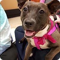 Adopt A Pet :: Daisy_Sherrie - Barnesville, GA