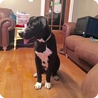 Adopt A Pet :: Jessie - Baden, PA