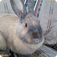 Adopt A Pet :: Truffle - Watauga, TX