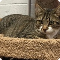 Adopt A Pet :: Chandler - Manchester, CT