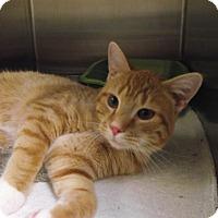 Adopt A Pet :: Reuben - Chambersburg, PA