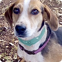 Adopt A Pet :: 2 sisters URGENT - Sacramento, CA