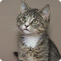 Adopt A Pet :: Merlin - Elmwood Park, NJ